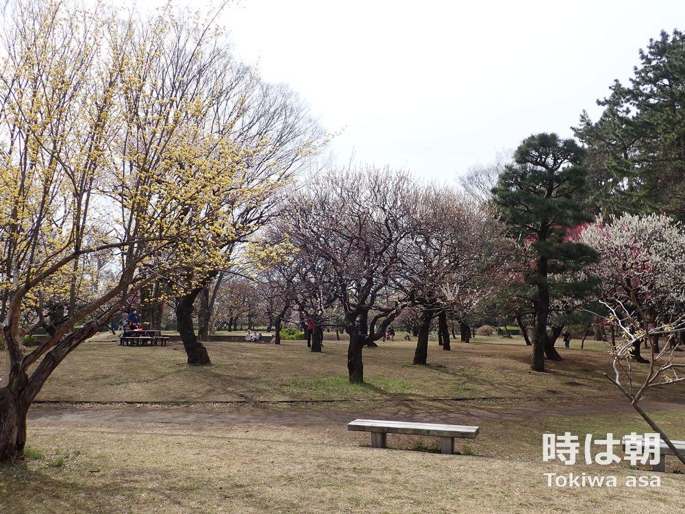 小金井公園 2019年3月